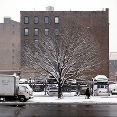 Callery pear tree in winter from New York City of Trees, Gardenista
