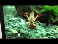 Aquaponics Geodome - witte worm, garnaal, eitjes levend en dood onder de microscoop - YouTube