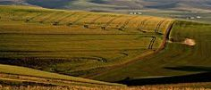 Fields near Caledon in the Overberg