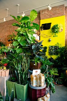 For more information about Terrarium Containers can visit… Lawn And Garden, Indoor Garden, Terrarium Containers, Terrariums, Welcome To The Jungle, Exotic Flowers, Green Plants, Crafts To Do, Trees To Plant