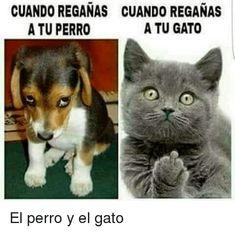 #memes #chistes #humor #funny #invequa #gato #gatos #perro #perros  Memes en español, memes de gatos. Memes.
