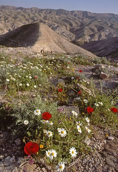 Views of Judean Desert Wilderness, between Jerusalem (Israel) and Jericho (Palestine)   Nowitz Photography