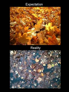 I have unrealistic expectations of leaves.