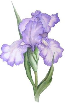 purple iris tattoo… back of right arm? Art Floral, Flower Graphic, Graphic Art, Watercolor Water, Watercolor Flowers, Watercolor Paintings, Tattoo Watercolor, Iris Violet, Purple Iris