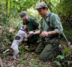 Searching for Summer Truffles: A Quest in the Tuscan Forest with Christiano Savini Grower Tour. Such fun. I participated in a Truffle hunt in the south of #France!! The #dogs actually are the hunters. #www.frenchriviera.com