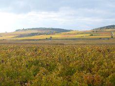 Les vignes couleur or en Côte d'Or | Trendy Escapes