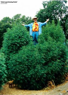 The Greatest Marijuana Gardens of All Time | High Times
