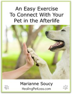 Connect with pet in afterlife - Healing Pet Loss - Marianne Soucy - cover big Dealing With Guilt, Dealing With Loss, Pet Loss Grief, Dog Loss, Cute Dog Pictures, Words Of Comfort, Dog Sweaters, Losing A Pet, Pet Memorials