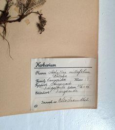 Herbarium via Hagagården. Click on the image to see more!