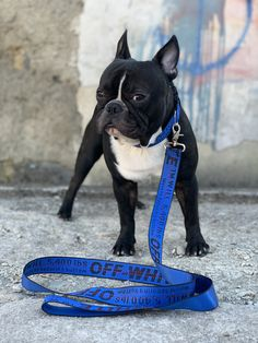 Newest designer dog collars, leashes, and harnesses for the best prices only at Supreme Dog Garage! Hypebeast Outfit, Designer Dog Collars, Supreme Wallpaper, Customer Support, Dog Walking, Dog Design, Boston Terrier, French Bulldog, Dogs