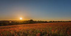 The Red fields. - Beautiful Kidderminster poppy field during sunset.