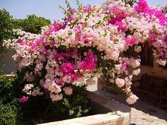 Gardens of my Life: TREPADEIRAS - Como escolher?