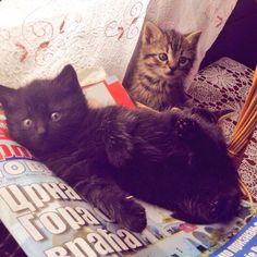 #Cats  #Cat  #Kittens  #Kitten  #Kitty  #Pets  #Pet  #Meow  #Moe  #CuteCats  #CuteCat #CuteKittens #CuteKitten #MeowMoe      Look at these cute little sidekicks, Bea and Kiko Thanks for the pic @neslihan_b...   http://www.meowmoe.com/42587/