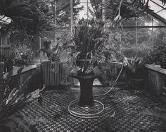 Kozo Miyoshi Matsudo, Japan,1987 ) [large fern pot on tea table, hose on tiled floor] gelatin silver print