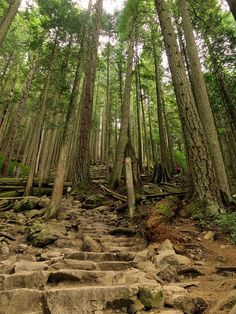 Grouse Grind Hike- Vancouver✔ {TIP} beware.... Only for the experienced hiker or for those who really love hiking!   dansteffen2907, via Flickr