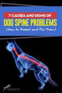 Pin On Dog Health Tips
