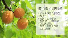 ¿Sabes que en mayo comienza la época de los #albaricoques?   Conoce sus #beneficios y añádelos a tu #dieta #consejos #cocina