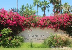 Haute Hotel: The Parker Palm Springs