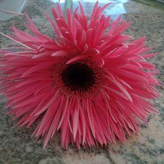 Spring gerbera Wedding Flower Guide, Wedding Flowers, Gerbera, Texture, Spring, Floral, Plants, Color, Surface Finish