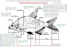 School Notes, Back To School, Survival, Study, Map, Education, Montessori, Blog, Ocean