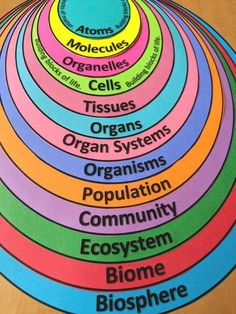 FREE visual tool to illustrate levels of organization. Also serves as a handy little note organizer! #levelsoforganization #atoms #molecules #organelles #cells #tissues #organs #organsystems #organisms #population #community #ecosystem #biome #biosphere #science