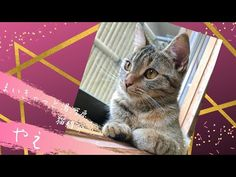 My Cat Yugawara まいきゃっと湯河原 猫紹介 やえ