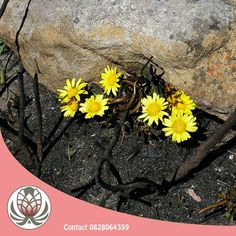 Many fynbos plants depend on fire for their survival, some needing the heat for their seeds to germinate! Contact Bofberg Flowers for any advice you may need for your fynbos garden.