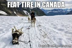 Funny pictures about Alaskan Flat Tire. Oh, and cool pics about Alaskan Flat Tire. Also, Alaskan Flat Tire photos. Funny Pictures With Captions, Picture Captions, Funny Animal Pictures, Hilarious Pictures, Funny Photos, Cute Animals With Funny Captions, Funniest Pictures, Caption Pictures, Snow Pictures