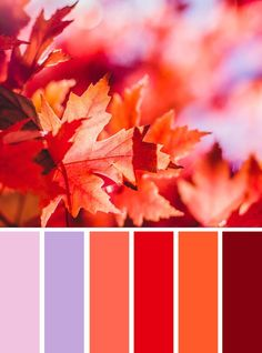 100 Color Inspiration Schemes : Autumn Leave Color Palette #orange #red #color #autumn