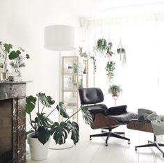 plants, white walls, contrast, minimal, Scandinavian design, eames lounge chair, philodendron, Living Room  #BurnsHouseInspo