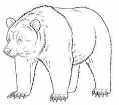 Tutorial about Grizzly bears. You'll find three head shots in different positions and expressions, some notes about bear paws and a full body grizzly Grizzly Bear Drawing, Grizzly Bear Animal, Grizzly Bears, Wild Animals Pictures, Bear Pictures, Bear Sketch, Bear Paintings, Bear Coloring Pages, Motifs Animal