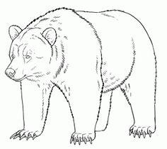 how to draw grizzly bears   http://www.dragoart.com/tuts/14979/1/1/how-to-draw-grizzly-bears.htm