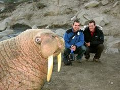 <b>The most creative, innovative, and inspiring practitioners in the professional animal photobombing scene.</b>
