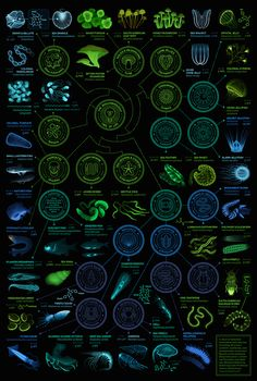 A visual compendium of bioluminescent creatures on Behance