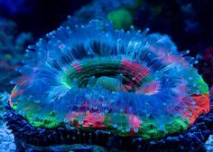 http://www.akvaryumhome.com/nano-deniz-akvaryumu/ Nano Deniz Akvaryumu Nedir ? Artıları Ve Eksileri Nelerdir ?
