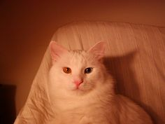 A very regal pose. Green Eyes, Cool Cats, Poses, Animals, Figure Poses, Animales, Animaux, Animal, Animais
