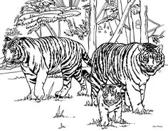 Tiger Coloring Pages For Kids Baby Jungle Animals