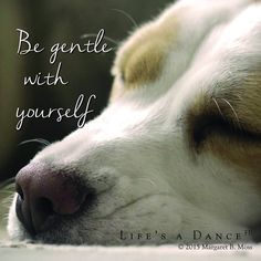 Be gentle with yourself ☀ Life's a Dance Human Kindness, Be Gentle With Yourself, New Chapter, Timeline Photos, Best Self, Inspirational Quotes, Faith, Dance, Dogs