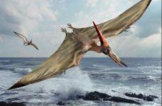Não se sabe! (FOTO: Revista VEJA). E na ilustração acima, o sanguinário animal pré-histórico, um réptil voador conhecido como Pterodáctilo. Visitar página  Visualizar imagem