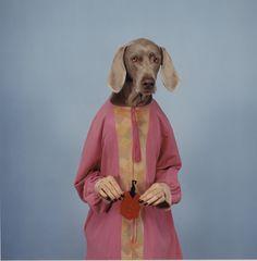 William Wegman, Untitled, 1995 William Wegman, High Fashion Models, Weimaraner, American Artists, Digital Photography, Animal Kingdom, Art History, Make Me Smile, Creatures