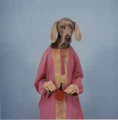 William Wegman, Untitled, 1995