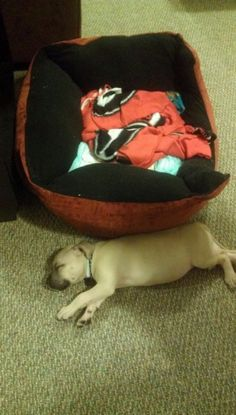 #Puppy Logic