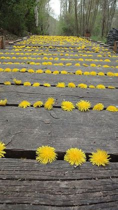 Inspired by Andy Goldsworthy: Natural Land Art for Kids: Dandelion art project inspired by Andy Goldsworthy