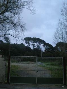 Enxergar as Árvores para compreender a Floresta...