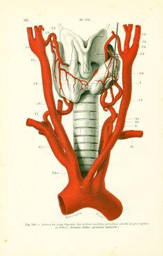 1897 Thyroïde Cou Grandeur Nature Planche Originale P. Tillaux Anatomie Chirurgie