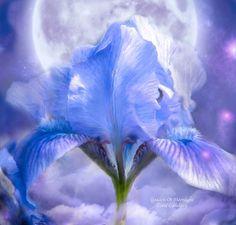 Iris - bogini księżyca Carol Cavalaris