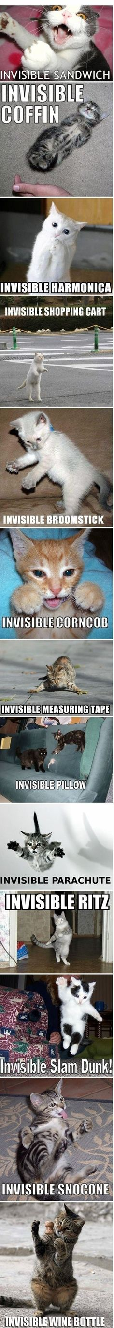 Invisible cat. So cute. Haha!! I thought of Johnny Cat.