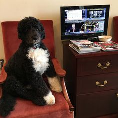 Picture of Bo in White House