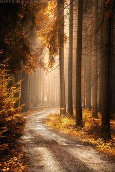 68 ideas for nature landscape forest pathways Landscape Photos, Landscape Photography, Nature Photography, Landscape Art, Forest Landscape, Evergreen Landscape, Landscape Nursery, Landscape Lighting, Mountain Landscape