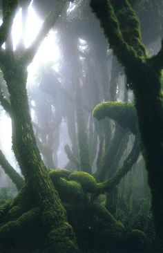 mossy trees -- this would make a great background for a cover for Miazaki's Princess Mononoke film. ;-)